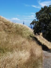 Sky Tower peeking over the ridge