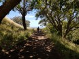 Coming down Mt Eden